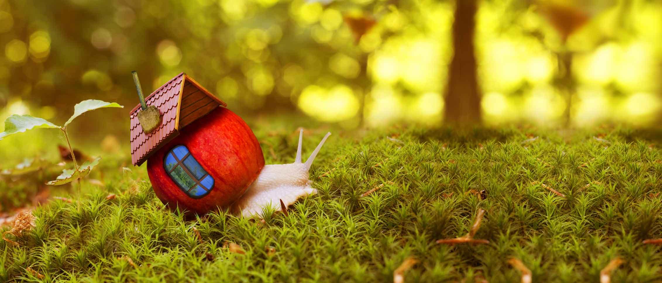 Schnecke mit ihrem Traumhaus